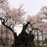 『神代桜』の画像