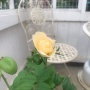 *ブルーローズとほっこり秋色の花