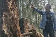 【滋賀】カブトムシの幼虫やクワガタ乱獲、ボランティア団体が10年かけて整備した再生の森が無残