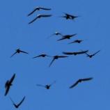 『 「天私無」鳥が空を飛ぶ権利』の画像