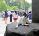 何でタヌキが観光大使やってるんだよ!?と思ってよく見たらネコだった