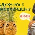 台湾 蔡英文総統「日本の皆さん、ありがとうございます!」日本のパイン購買量が前年比約130%増の5千トンになるとの見通し 中国・習近平の嫌がらせは逆効果か