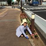 『戸田市・市役所南通りの花壇に綺麗な花が植えかえられました!』の画像