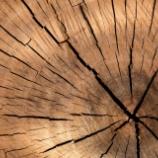 『弾丸も貫通しない木材――スチールに匹敵する高強度「スーパーウッド」』の画像