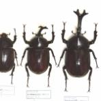 今日の昆虫