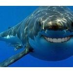 【衝撃】グーグルの海底ケーブルがサメに食べられていた!