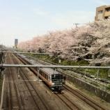 『桜が・・・終わってしまいました (T_T)』の画像