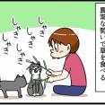 なぜネコはネコ草を食べるのか・・・?