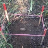 『地雷原NO.08632での処理活動』の画像
