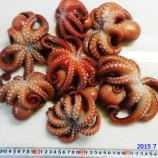『国東の食環境(75)七匹の真蛸』の画像