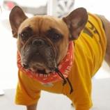『【熱中症対策】看板犬アグーの一押しクールグッズ!』の画像
