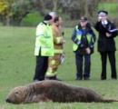 【画像】 迷いアザラシ、迷いすぎて畑に現る/イギリス