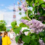 『初夏の大通公園Odori Park in early summer.』の画像