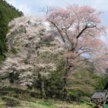 『いつか行きたい日本の名所 苗代桜』の画像