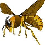 『オオスズメバチのスペックがマジでヤバい』の画像