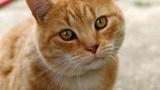 「ネコちゃーん!どこ行っちゃったのぉー!!」・・・秀吉は猫好きだった。
