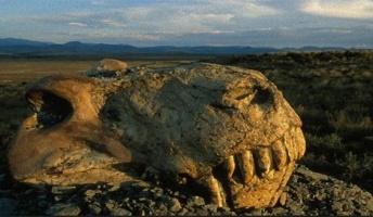 地球誕生以来この地球上の生物は5回絶滅してるらしいんだが