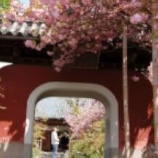 『石峰寺 【情報】』の画像