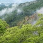 『桜。吉野山に。』の画像