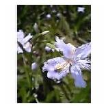『竹林に咲く花』の画像
