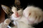 ワイ「……」シコシコシコ ネッコ「なんやこれー」猫パンチ
