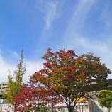 『【写真】 秋の青空と秋の花。 Xperia 5 作例。』の画像