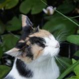『睡蓮咲いた』の画像