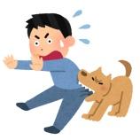 『【敗北】ワイ、チワワと喧嘩』の画像