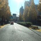 『プラチナ通りも柏色?』の画像