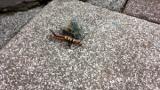 【派手】めっちゃ気持ち悪い毛虫見つけたったwww(※画像あり)