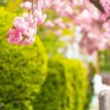 『咲き乱れるBloom in bloom.』の画像