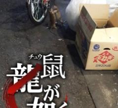 【中国の反応】中国人「やっぱり歌舞伎町は危険な場所だぜ・・・」