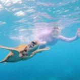 『海ガメさんと泳いできたよ』の画像