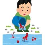 『中国とうさん「なぜ日本人はザリガニを食べないの?馬鹿なの?w」』の画像