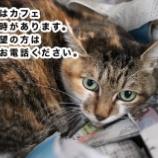 『【里親募集中】事前予約必須の犬猫たち』の画像