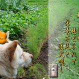 『フォト短歌「迷犬嘆く」』の画像