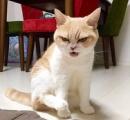 【画像】ダークサイドに堕ちたような眼差しの日本のネコが海外で話題に