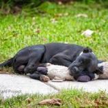 『心の拠り所:捨てられた犬とぬいぐるみ』の画像