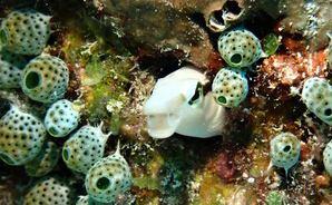 竹富島の海中で出会った生き物たち