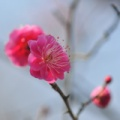 2月4日は、「立春」