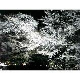 『伊賀川〓桜』の画像