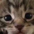 子ネコが前足をそっとあげた。えいっ! → 猫好きが喰らったら死んでしまう、危険なハイタッチがこちらです…