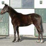 『オカダスタッド在厩2歳牡馬は間もなく移動』の画像