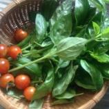 『【家庭菜園】目標収穫量3倍!楽しい!けれど奥深かった野菜作り』の画像