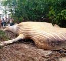 【謎】なぜかアマゾンのジャングルから巨大なクジラが発見される