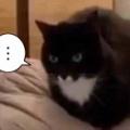 ネコは膝で寝転ぶのが好き。でもお父さんは乗ってくるのが嫌い。ちょっとずつにゃ♪ → 猫はこうする…