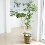『【インテリア】大きめの観葉植物がある部屋の参考画像集【実例】 3/3 【インテリアまとめ・インテリアブログ 人気 】』の画像