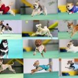 『『ZIP』のププも飛んだ大人気飛行犬撮影会がワイズドギー射水店で開催決定!』の画像