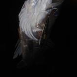 『東京シーバス106【爆釣荒川…LONGIN縛り】』の画像