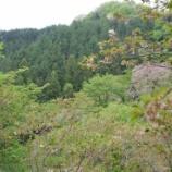 『多摩森林公園の桜Ⅱ』の画像